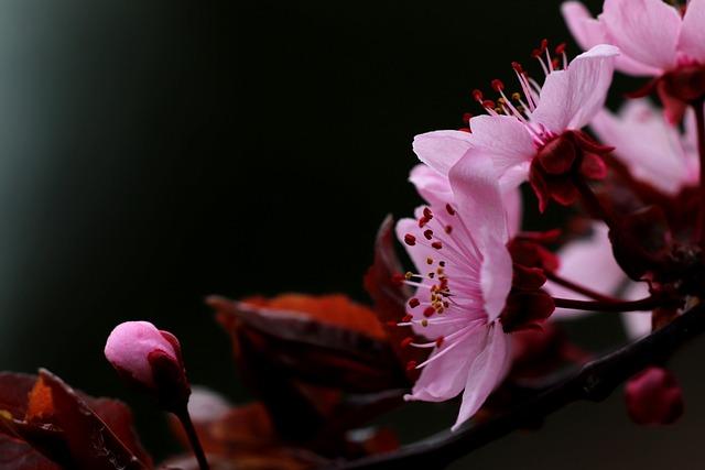 Flower, Nature, Flora, Petal, Leaf, Outdoors, Season