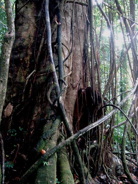 Tangled, Tree, Jungle, Domenica, Trees, Flora, Nature
