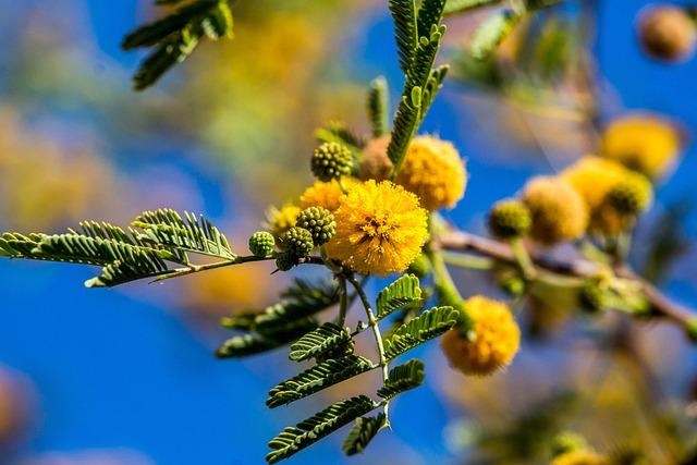 Desert, Tree, Bloom, Flower, Nature, Branch, Flora