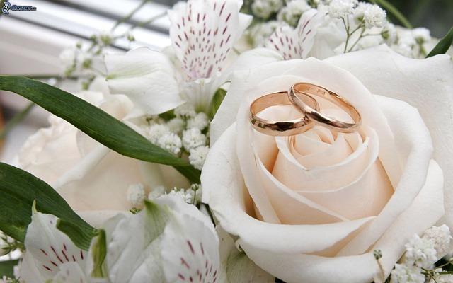 Flower, Wedding, Nature, Flora, Floral