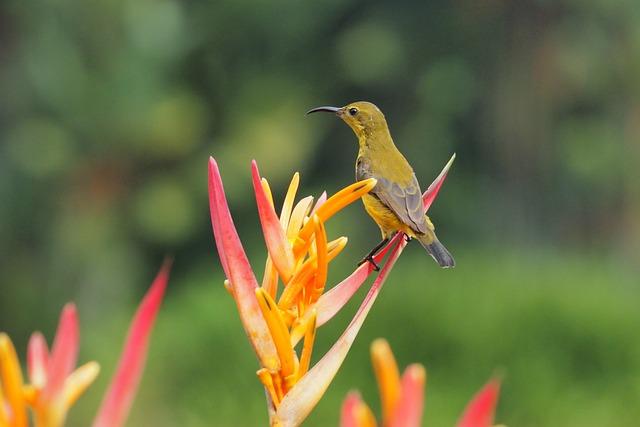 Nature, Flower, Outdoors, Bird, Flora, Wildlife, Garden