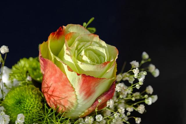 Rose, Bouquet Of Roses, Bouquet, Floral Arrangement