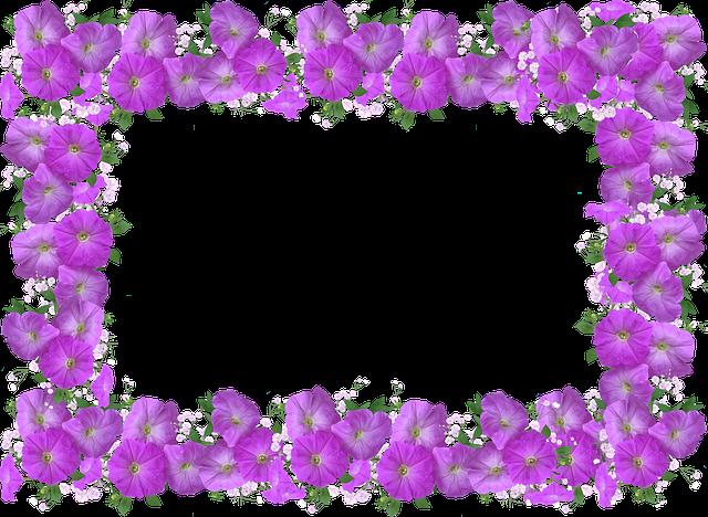 Frame, Border, Petunia, Floral Decoration