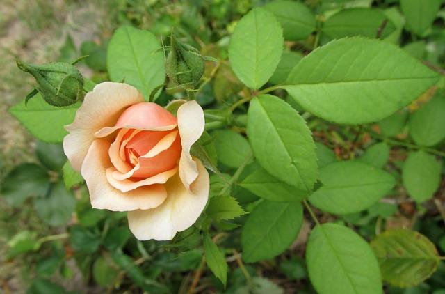 Leaf, Flower, Nature, Flora, Floral