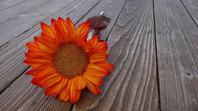 Sunflower, Autumn, Flower, Bloom, Floral, Blossom
