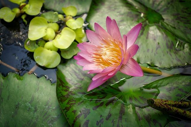 Flower, Plant, Nature, Flowers, Floral, Blossom, Bloom