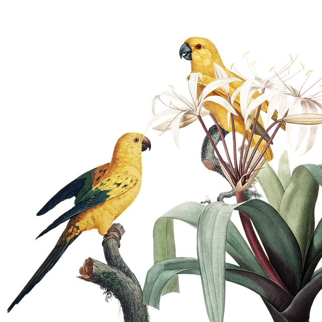 Bird, Frame, Floral, Flower