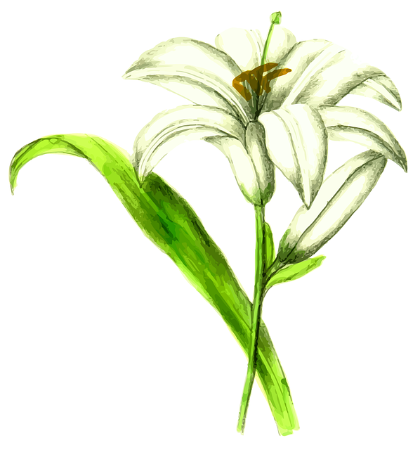 Floral, Flower, Leaf, Leafy, Leaves, Lily, Plant