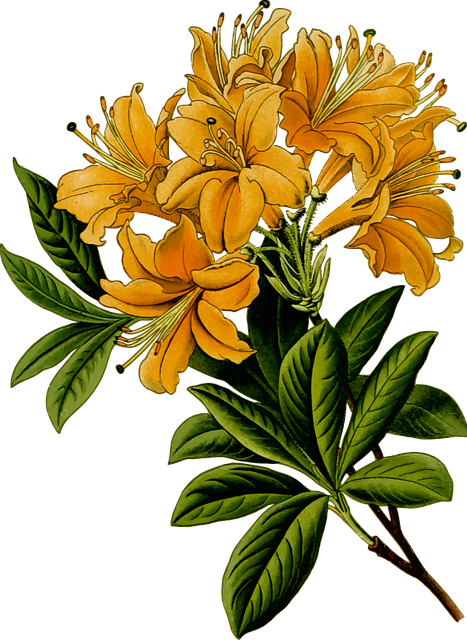 Branch, Floral, Flower, Herbal, Leaf, Leafy, Leaves