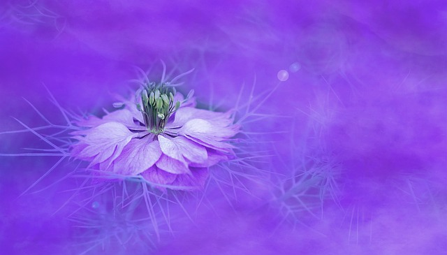 Flower, Nature, Background, Color, Floral, Violet
