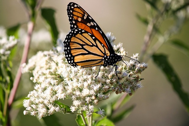 Butterfly, Flower, Spring, Nature, Floral, Monarch