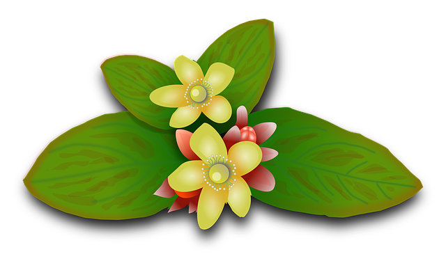St John's Wort, Plants, Flowers, Floral, Flowery, Herbs