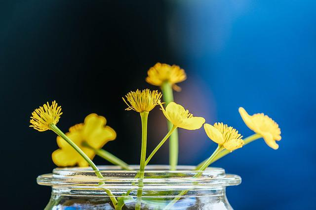 Nature, Flower, Plant, Floral, Summer, Grass, Color