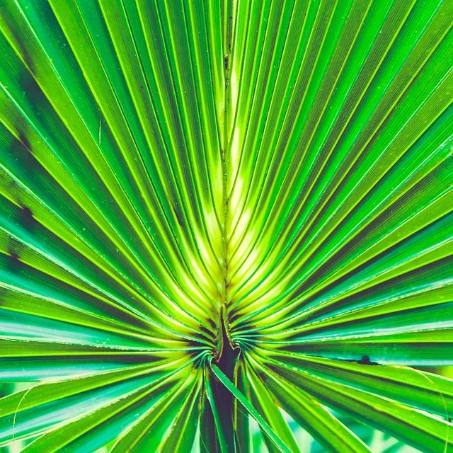 Design, Florida, Green, Nature, Palm, Palm Leaf