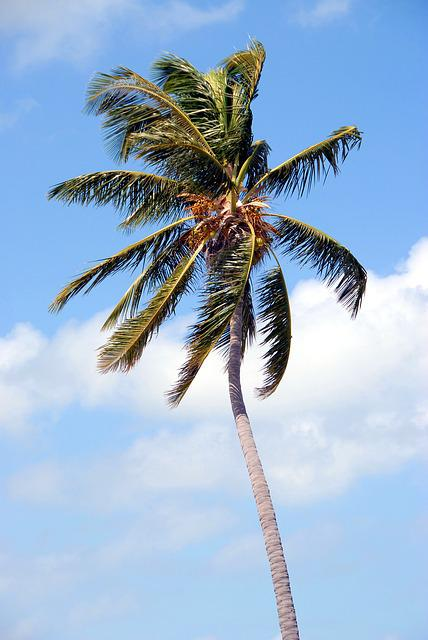 Palm Tree, Tropical, Florida, Usa, Palm, Tree, Vacation