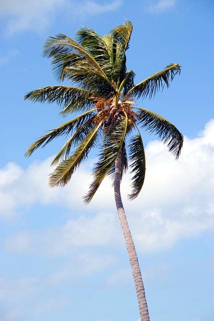 Palm Tree, Tropical, Florida, Usa, Palm, Tree, Vacation