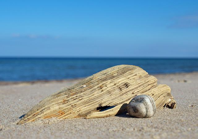Beach, Flotsam And Jetsam, Wood, Bank, Coast, Water