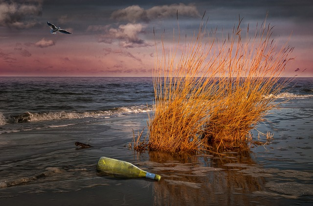 Beach, Sea, Baltic Sea, Abendstimmung, Flotsam