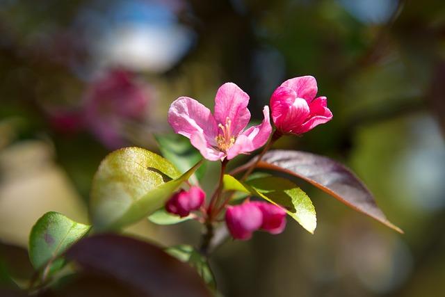 Nature, Flower, Plant, Sheet, Garden, Apple Tree