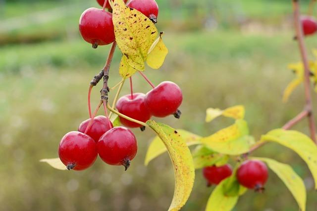 Apple Baby, Flower Apples, Apple, Mini Apple, Wood