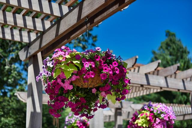 Flower, Architecture, Garden, Summer, House