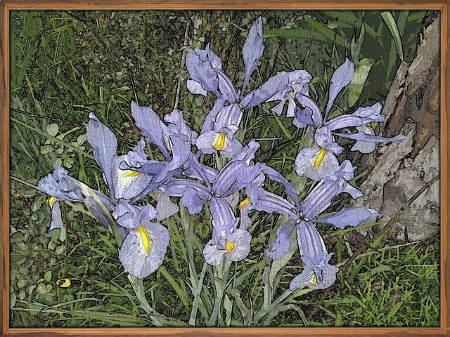 Flower, Painting, Iris, Art
