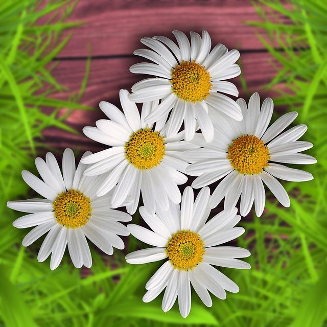 Flowers, Flower, Background, Design, Nature, Margaritas