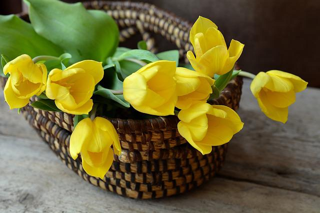 Tulips, Cut Flowers, Flower Basket, Basket, Flowers