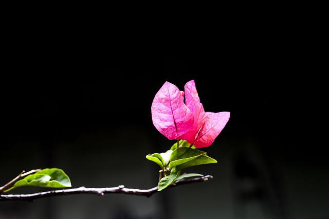 Flower, Macro, Beautiful