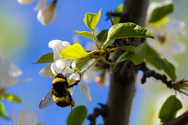 Bumble Bee, Bee, Insect, Nature, Bumblebee, Flower