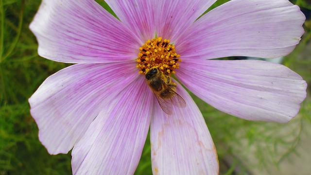 Village, Poland, Nature, Flower, Pink Flower, Bee
