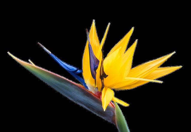 Caudata, Flower, Bird Of Paradise Flower, Strelitzia