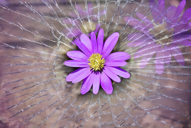 Balkan Anemone, Flower, Spring Flower, Blossom, Bloom