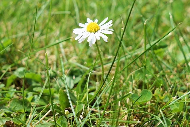 Flower, Blossom, Bloom, Daisy, Nature, Plant