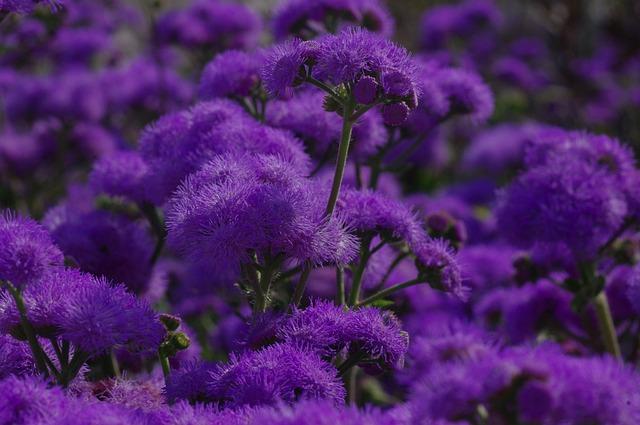 Blossom, Bloom, Flower, Blue, Violet, Plant, Bloom