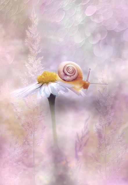 Daisy, Miss Daisy, Flower, Blossom, Bloom, Flora, Close