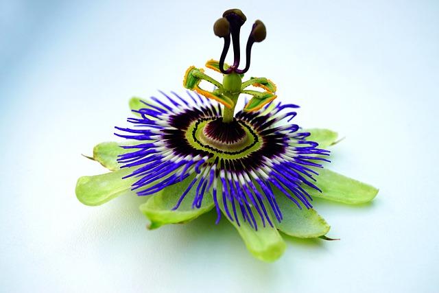 Plant, Flower, Nature, Botanical, Flora, Green, Bloom