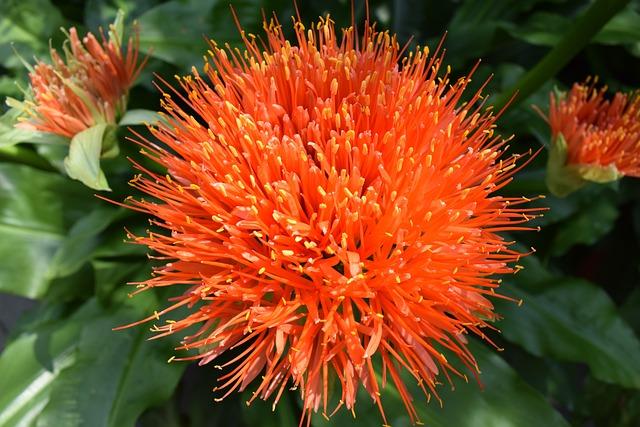 Orange, Flower, Bloom, Summer