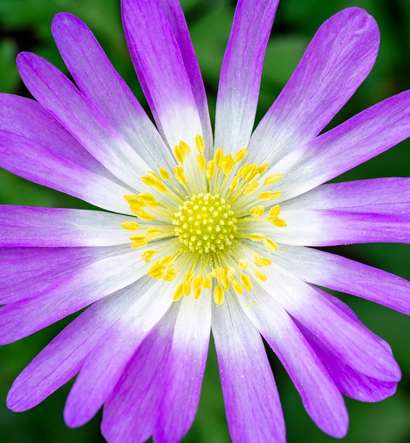 Flower, Bloom, Blooming, Nature, Blossom, Fresh