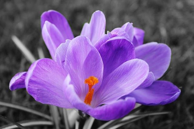 Nature, Flower, Flora, Blooming, Garden, Floral