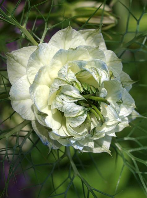 Flower, Nature, Flora, Garden, Leaf, Floral, Blooming