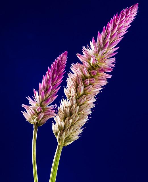Blossom, Bloom, Flower, Wild Flower, Close Up