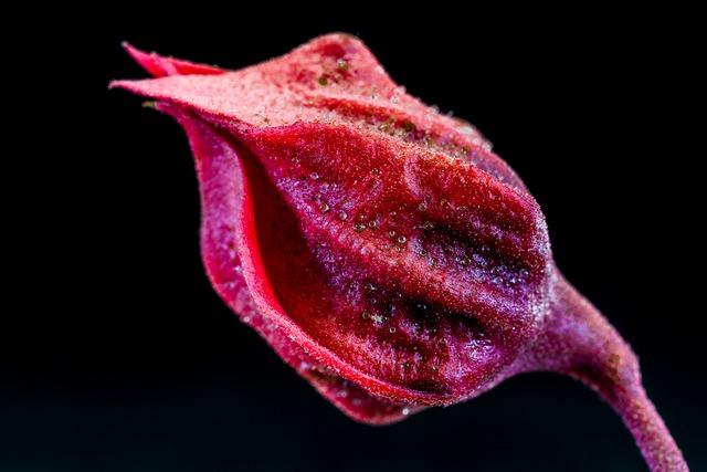 Blossom, Bloom, Flower, Red Purple