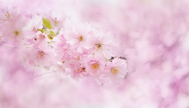 Blossom, Flower, Plant, Nature, Blossom, Bloom, Garden