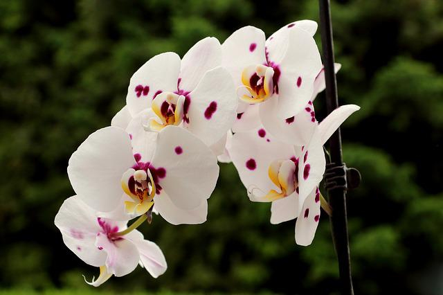 Orchids, Blossom, Bloom, Flower
