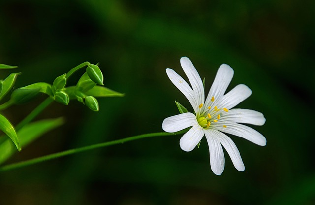 Nature, Plant, Leaf, Flower, Summer, Blossom, Bloom