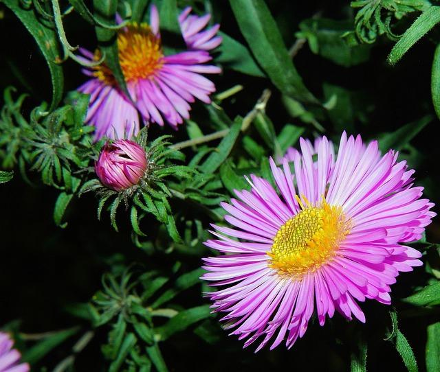 Flower, Blossom, Bloom, Purple, Plant, Close, Summer
