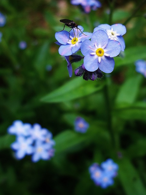 Flower, Flowers, Insect, Blue, Violet, Green, Nature