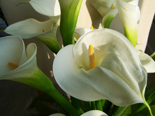 Flower Bouquet, White Calla Lily, Cut Flower