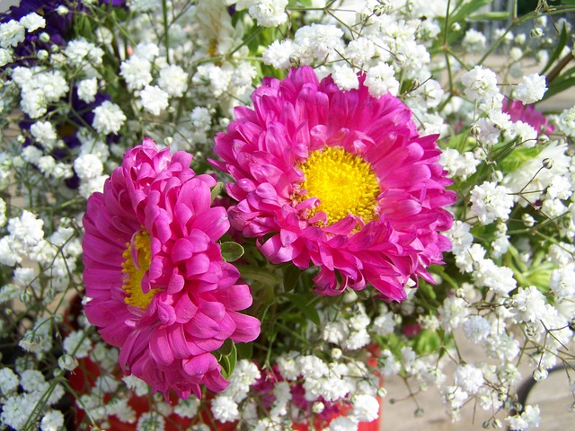 Flower Bouquet, Pinkish-white, Cut Flower